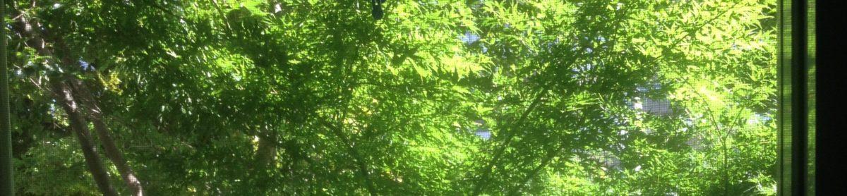 東京都板橋区大山 思考のデトックス・アクセスバーズのHIDEMIサロン